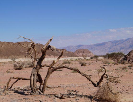 Wüste Israel
